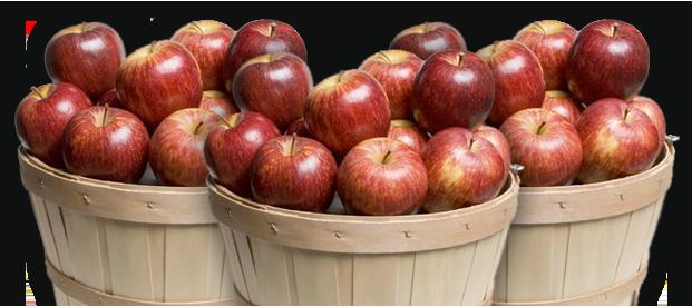 Apple Season 2015