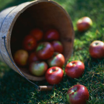 2013 Apple Picking Season Is Over…. Come Visit Us In Strawberry Season