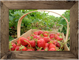 June is  Strawberry Season