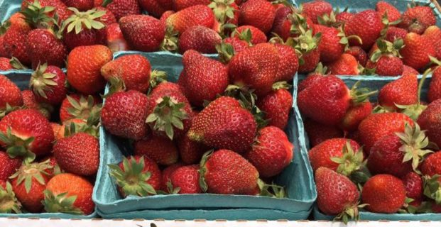 U- PICK & FRESH  STRAWBERRIES